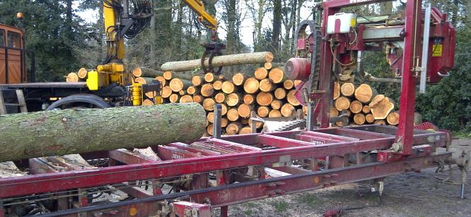 Larch being cut for Escot squirrel enclosure and walkway
