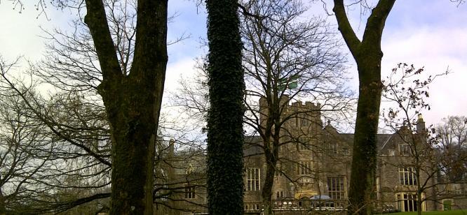 Tree surgery at Holcombe Court